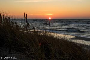 Marram Grass During Sunset in Prerow